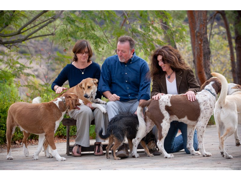 Animal Lovers Are Opting for Non-Traditional Pets